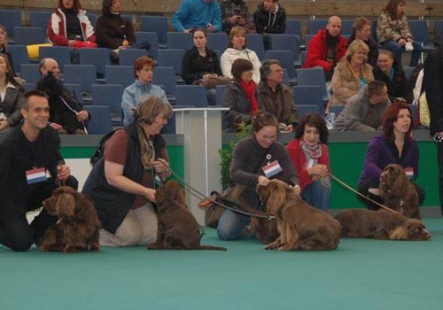 Sussex Spaniel Society